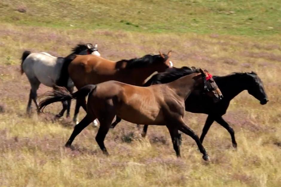 Kolla klippet: Brösarpsprojektet – med sikte på hållbara sporthästar