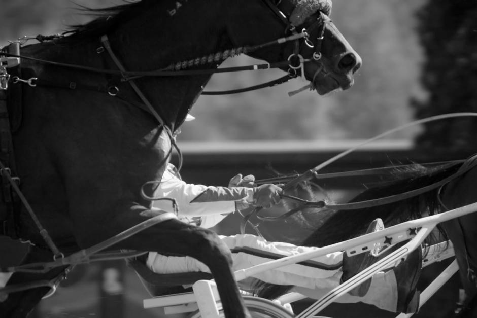 Travkusk utpressades efter sexuella övergrepp på hästar