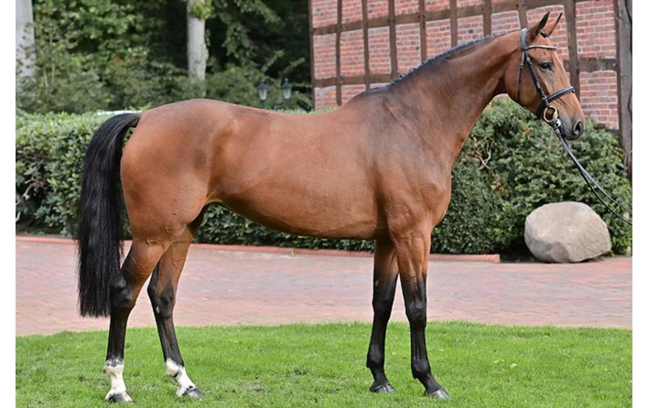 Miljonhästar såldes i tom arena på PSI-auktionen