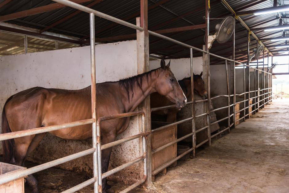 Sverige blir EU-centrum för hästvälfärd