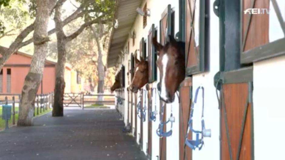Kolla klippet: Marockos hästcentrum