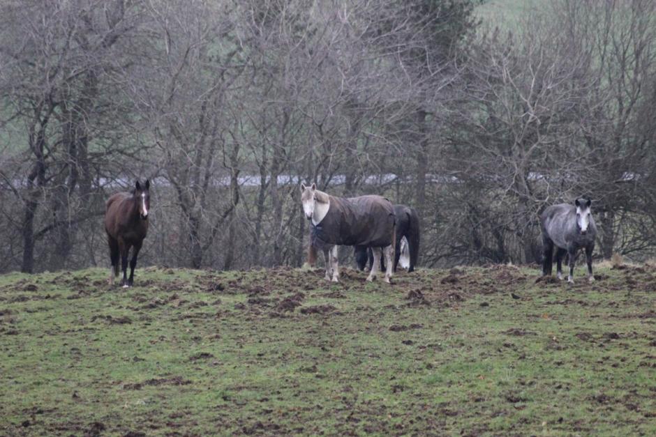 """""""Troligare att hästarna blir skadade av dålig ridning än av lite spring i hagen"""""""