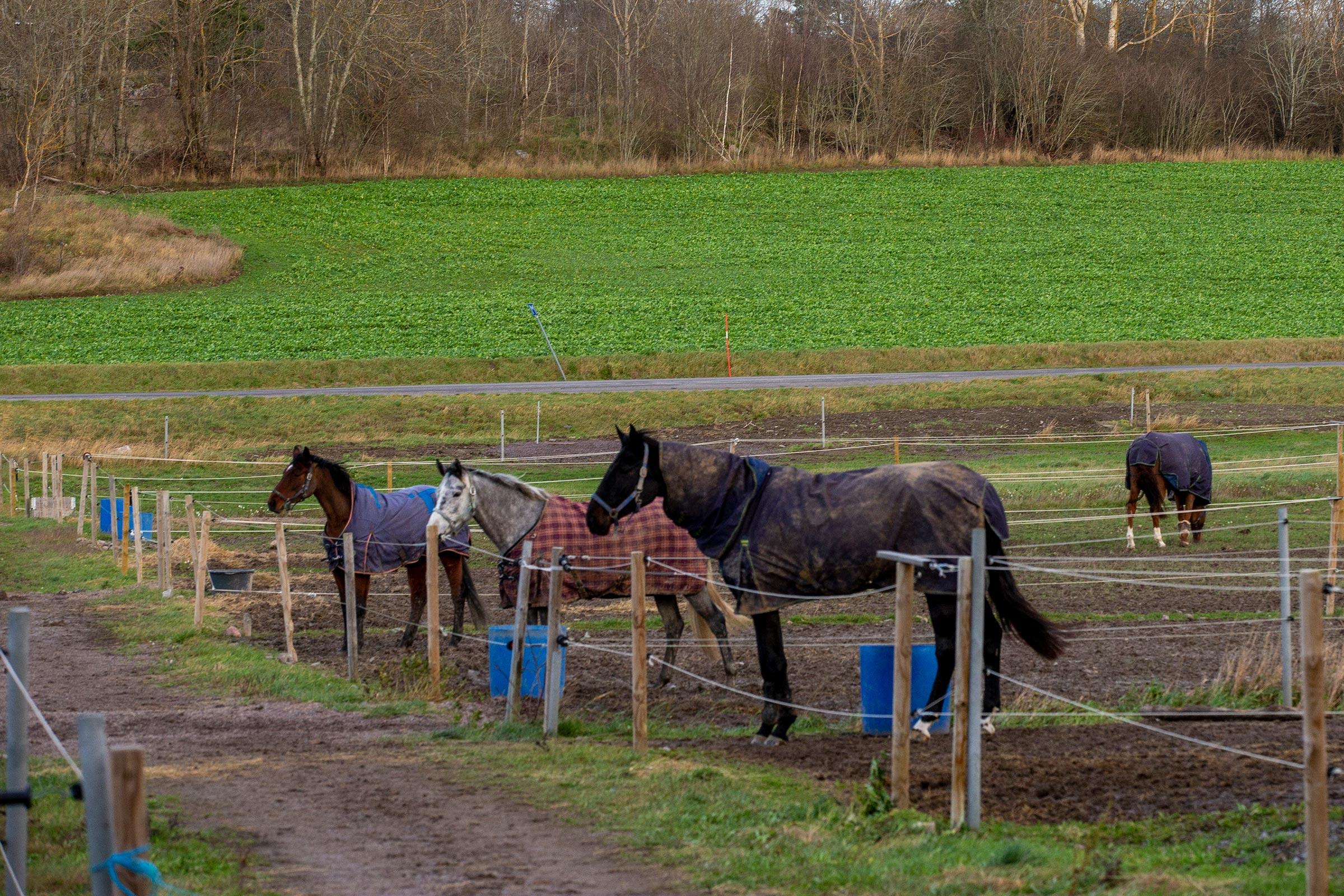 Hastar-i-hage-1-201122-rt