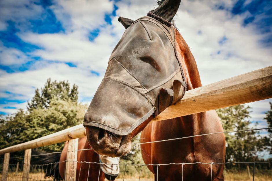 """Fotoprojekt med pandemifokus: """"Maskerade hästar"""""""