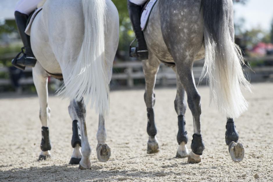 Fler smittade hästar i Sverige med koppling till virusutbrottet