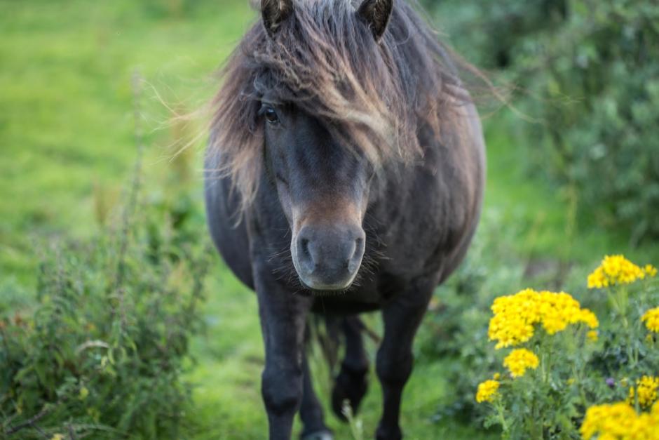 Mest läst 2020 – förrymd ponny hittades död