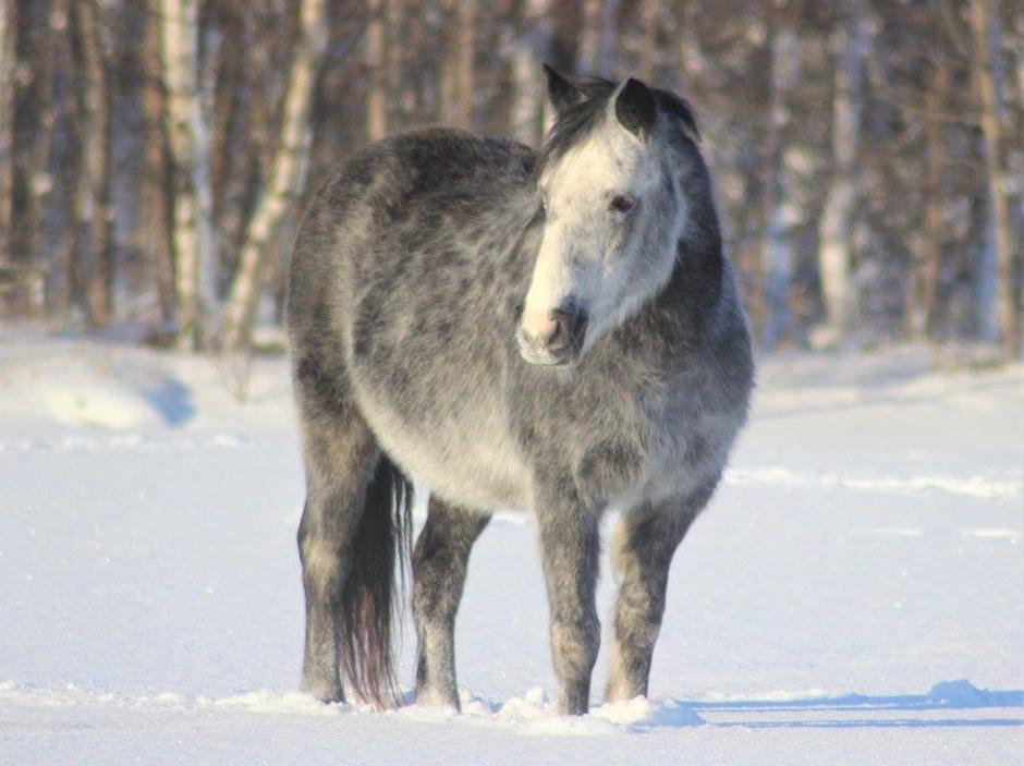 """""""Det enda jag såg var en ponnysvans som viftade till och så travade hon iväg"""""""