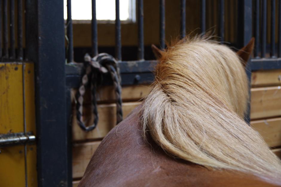 Dömd till dagsböter – hade för många hästar