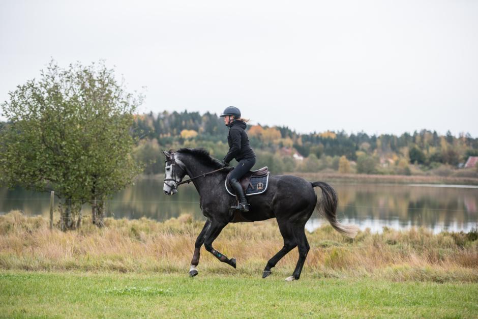 """Kristinas blogg: """"Vad är ett bra hästliv?"""""""