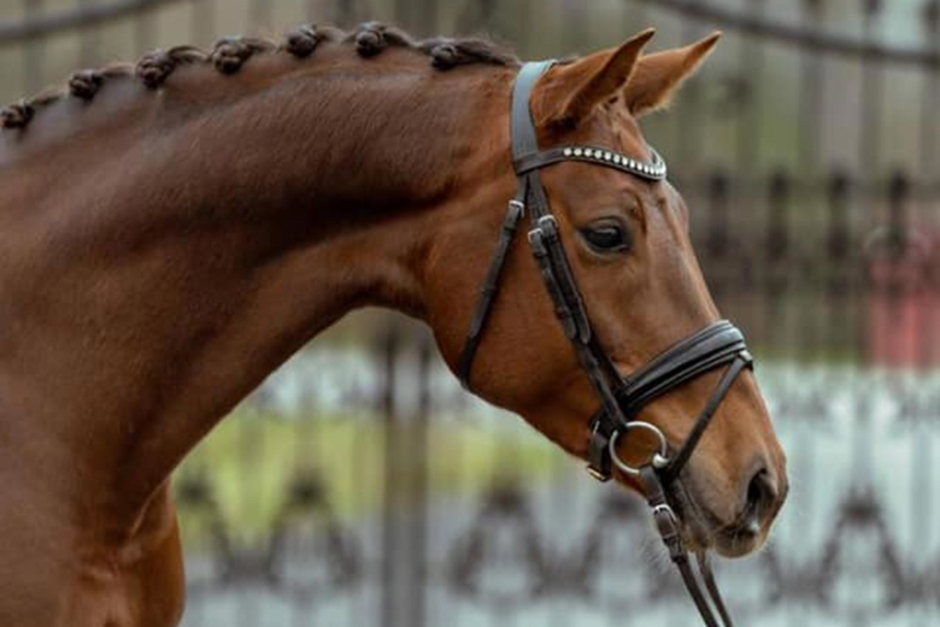 """""""Hästar och ponnyer för alla"""" – budgivningen drar igång"""