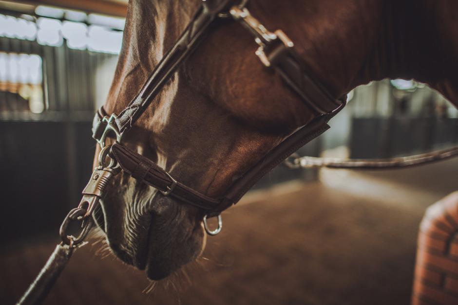 Region vill storsatsa på hästutbildningar