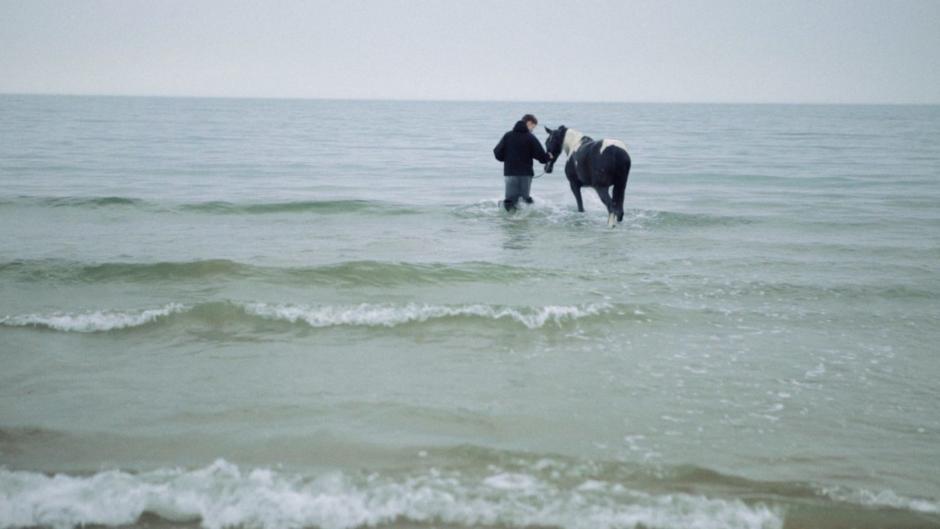 "Hästfilmen ""A Legacy of Horses"" vann guldbagge"