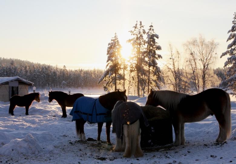 Hage1 Foto Malin Jonsson Mindre