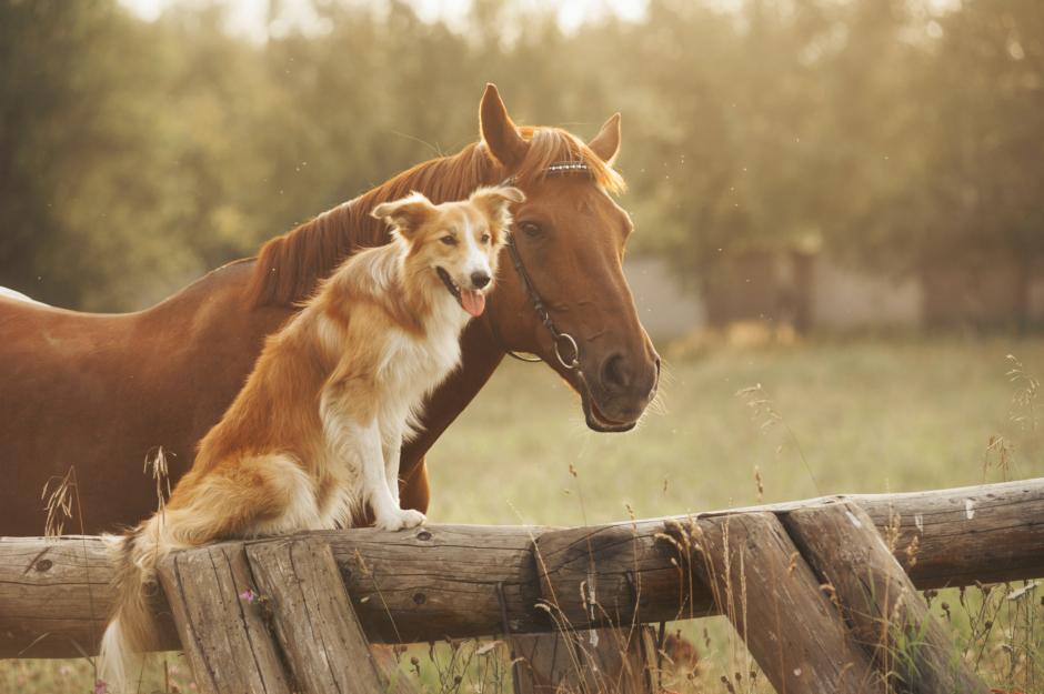 Därför är hästar bra för själen
