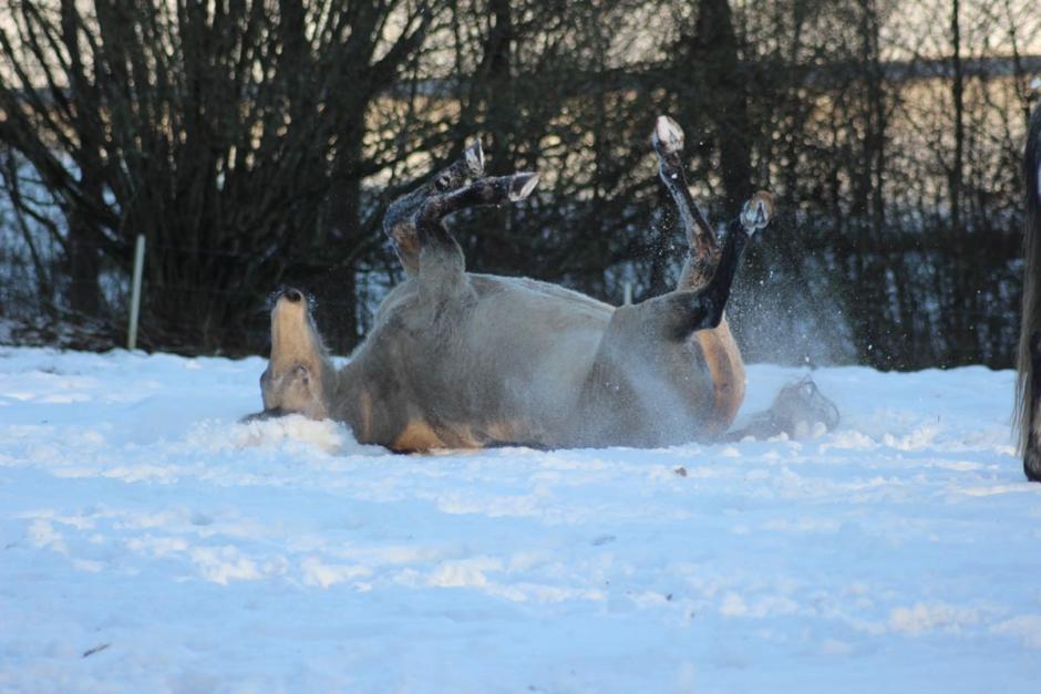 """""""En hästlig rättighet att få rulla sig utan täcke i nysnö"""""""