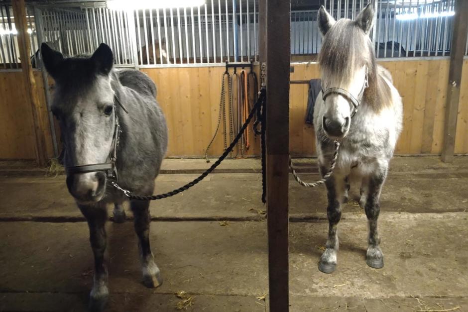 """""""En prisvärd häst för en ridskola är en som kan löna sig"""""""