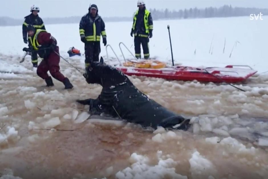 Kolla klippet: Dramatisk räddningsinsats när hästar gick genom isen