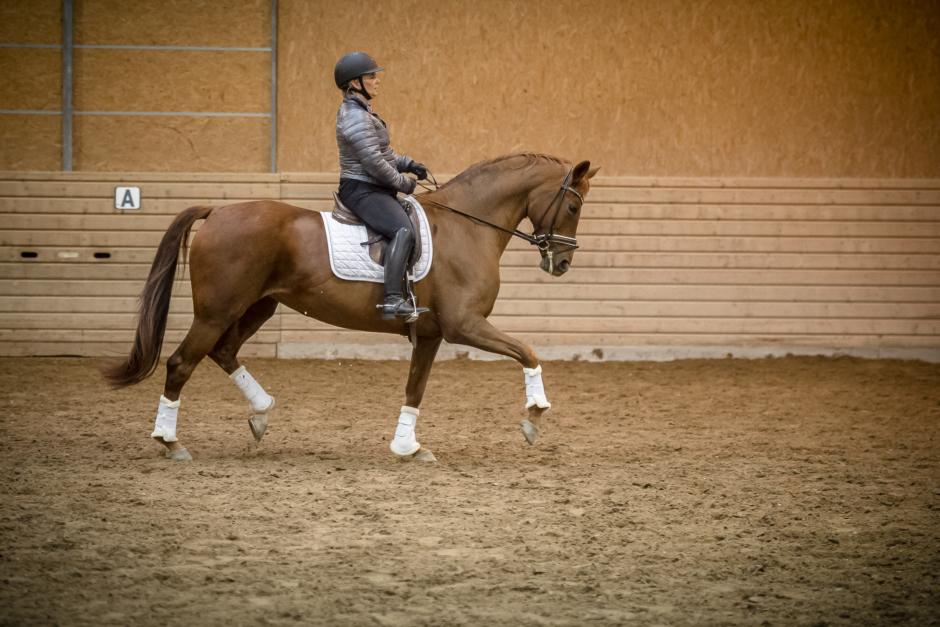 Reglera hästen lättare och få högre ridbarhet