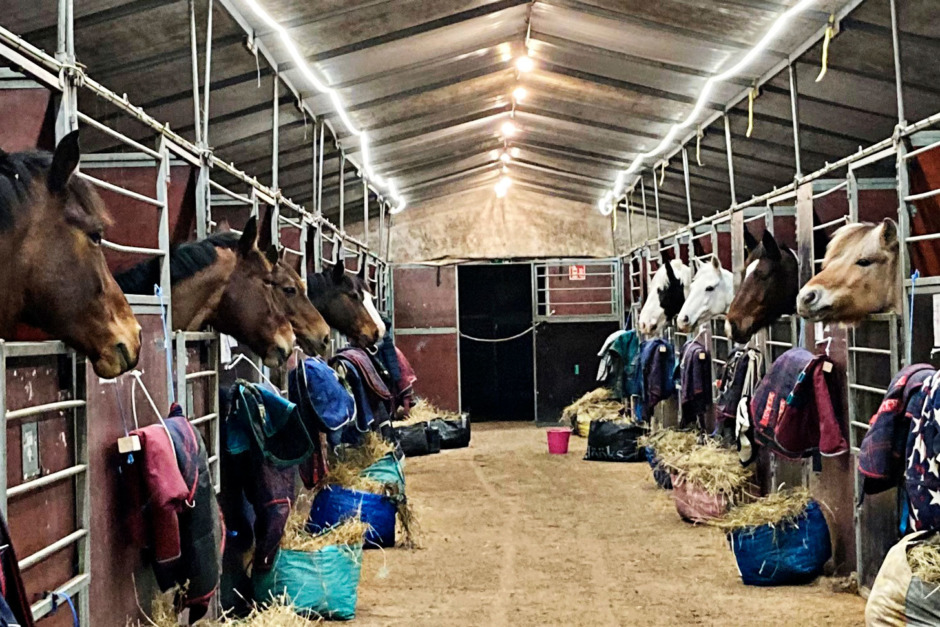 Stjärnholms hästar kan bli hemlösa