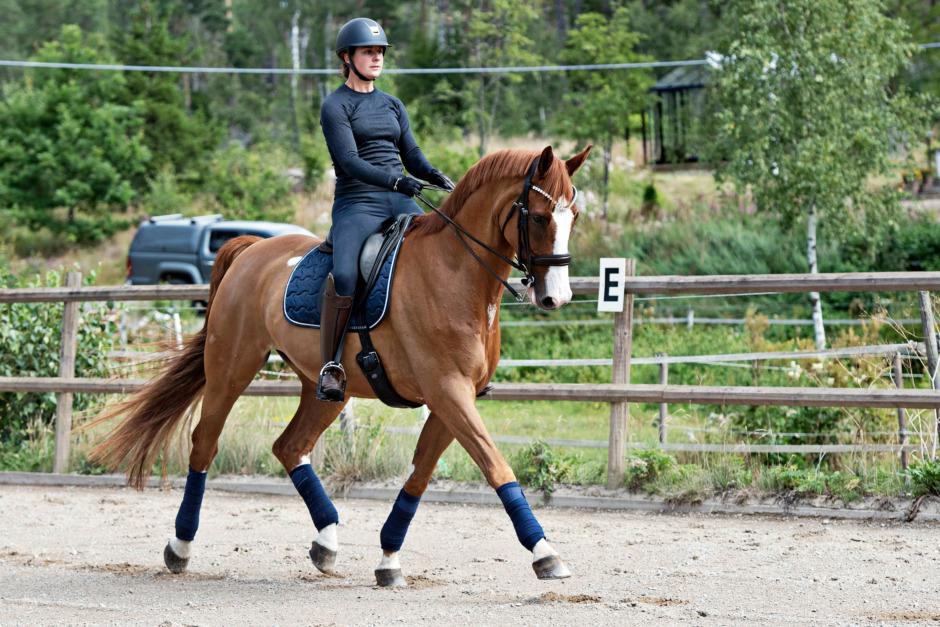 Så tränar du hästen hållbar