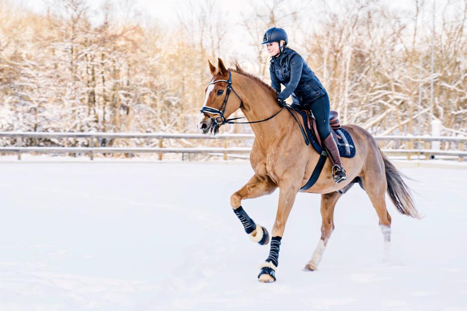 Galoppera hästen frisk