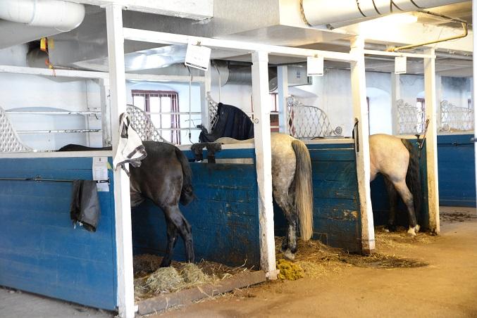 Smitta bland hästarna hos Örebro Fältrittklubb