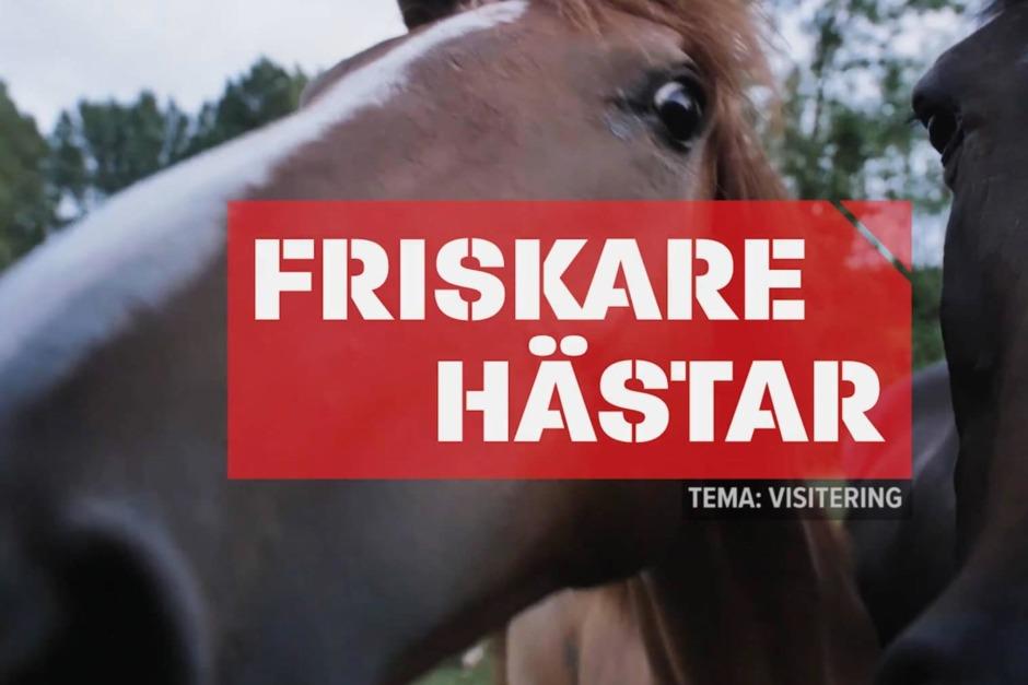 Friskare hästar med daglig visitering
