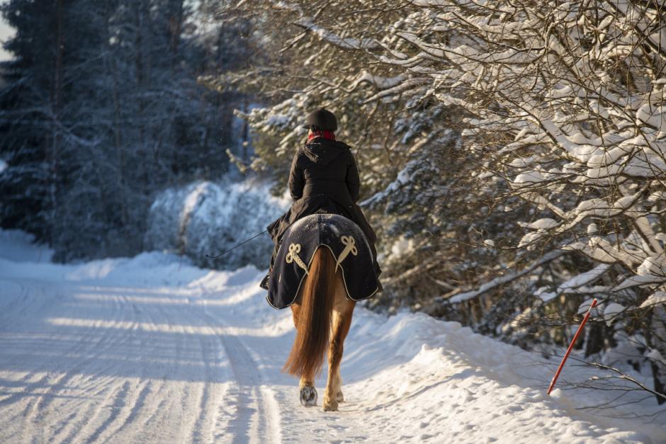 Äldre man åtalas för att ha kört på häst med husbil