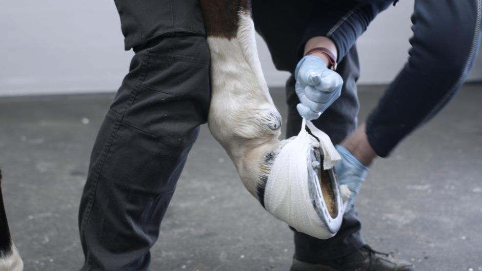 Friskare hästar: Lär dig de fem viktigaste bandagen