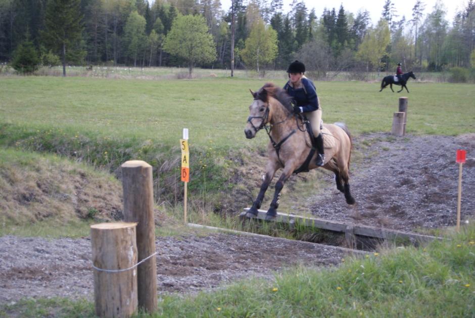 """""""Det går alltså att köpa lycka i form av en häst"""""""