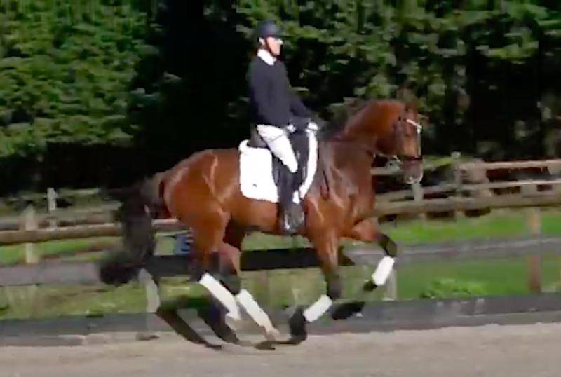 Kolla klippen: Häst till svensk köpare vid auktion på dressyrhästar