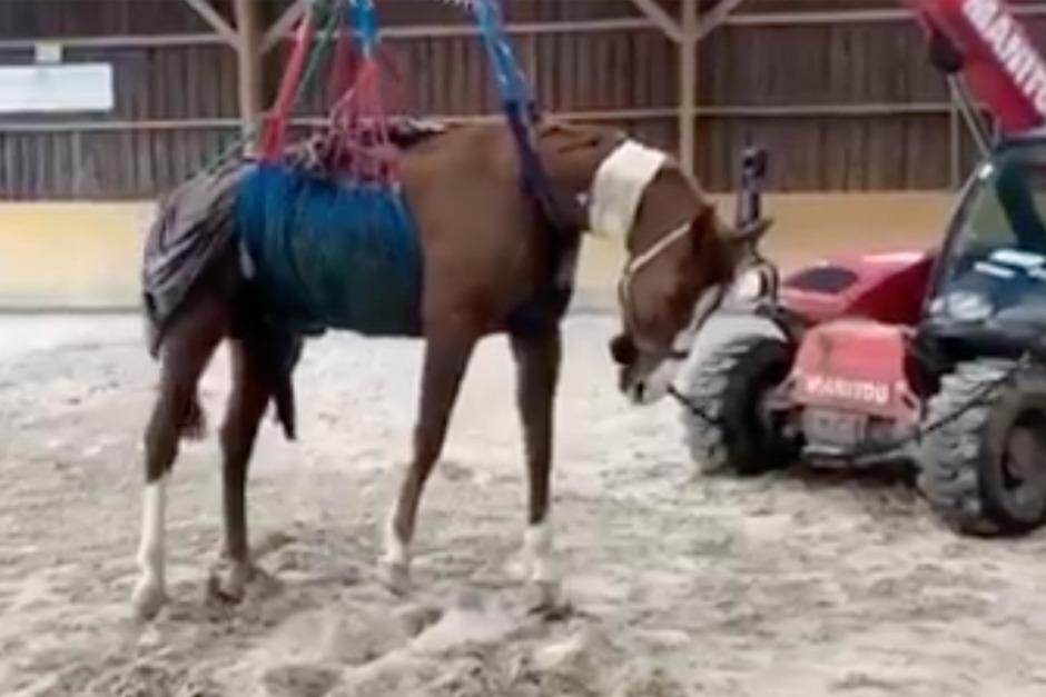 Kampen för att rädda en häst med EHV-1