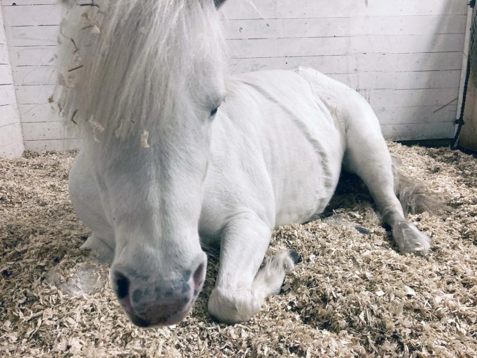 Ponnypappan: När drömmen övergår i mardröm