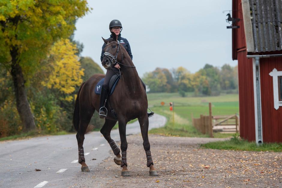 Ge trygghet till hemkär häst