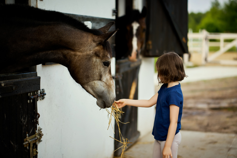 Krossade hästdrömmar – en ekonomisk självrannsakan av ridsporten