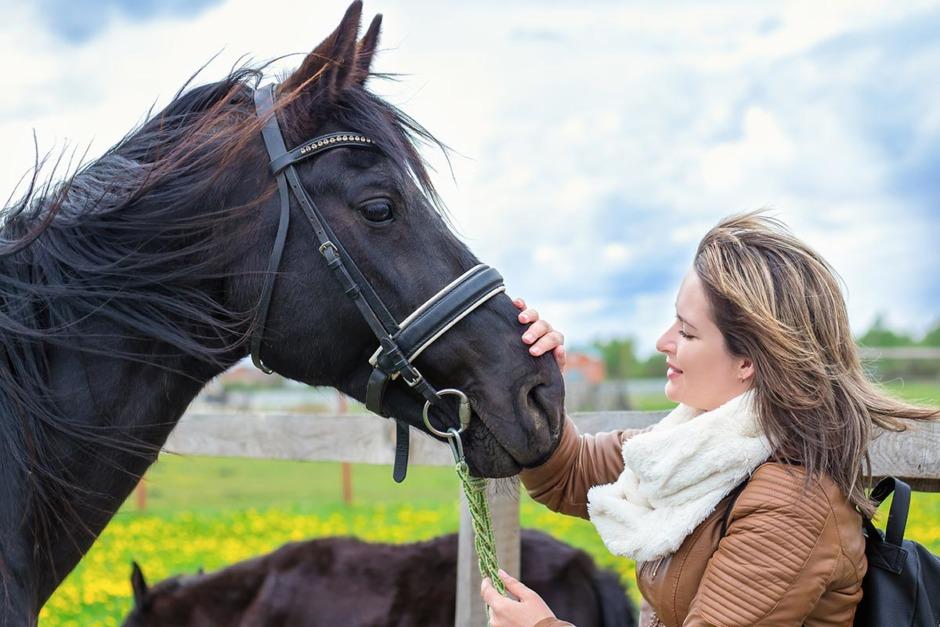 Hästar gillar småbarnsspråk