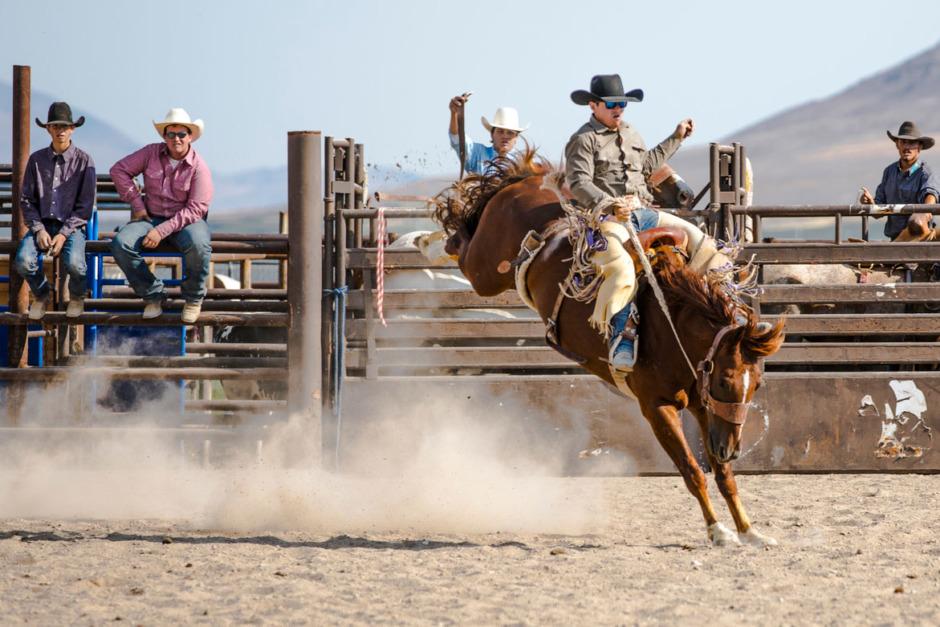 Forskningsnyheter: Hästens uppfattning om rodeo