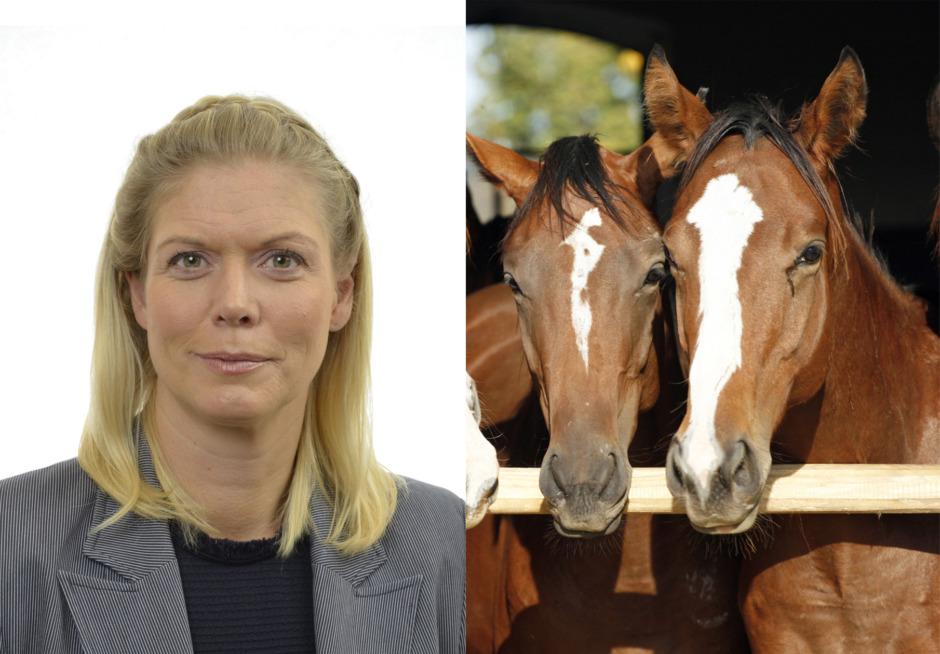 Regeringens signaler kring lagförslag om hästköp skapar oro