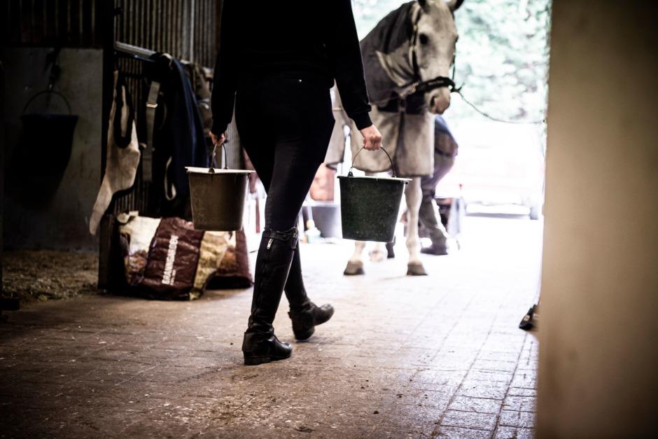 Hästskötarna – ridsportens moment 22