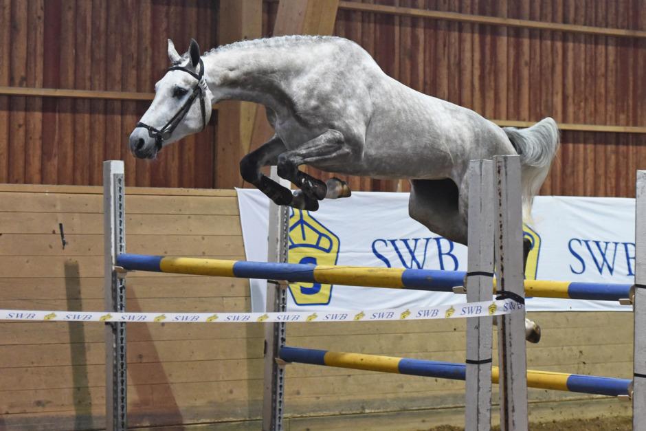 En häst för toppsporten