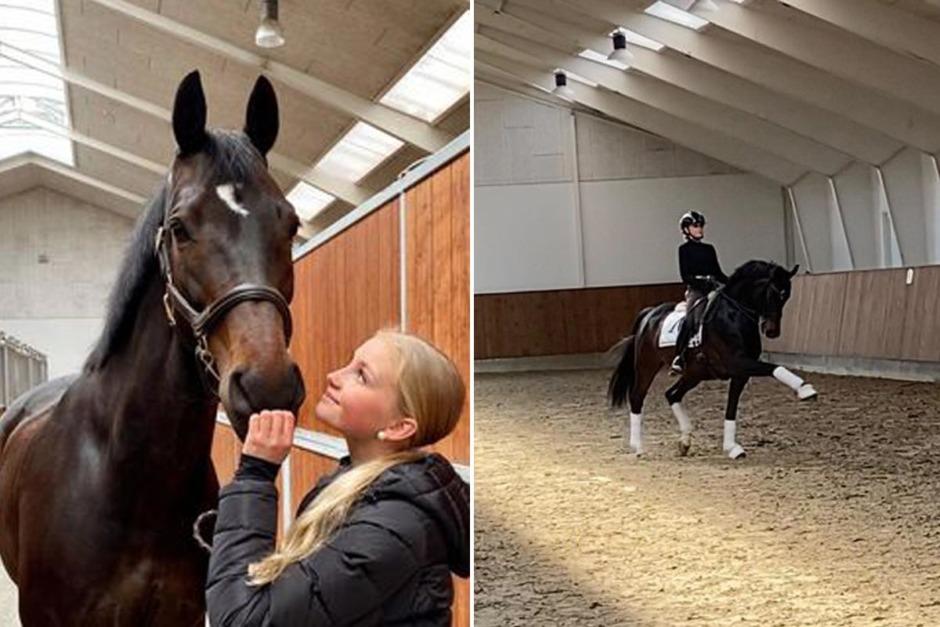 GP-hästen Quentin SV till Ellen Hedbys