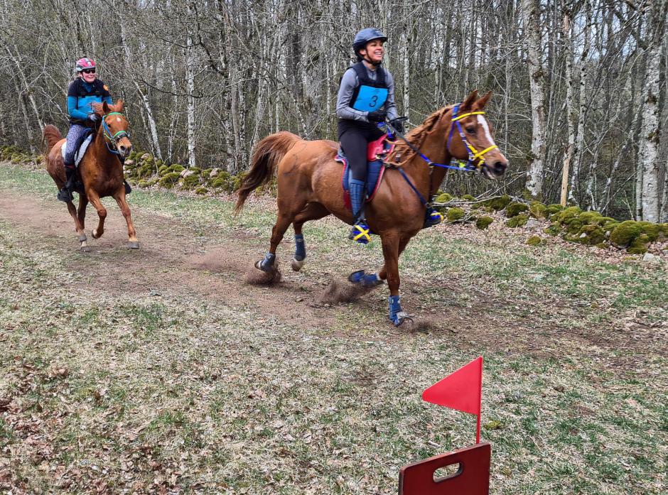 Rutinerad segrare på årets första distansritt