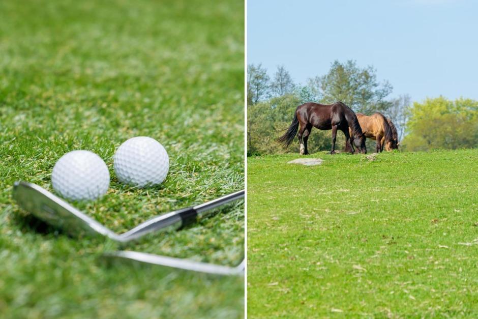 Övade prickskytte mot hästar – med golfbollar