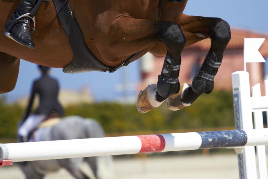 Importerade häst från Irland – utan att betala