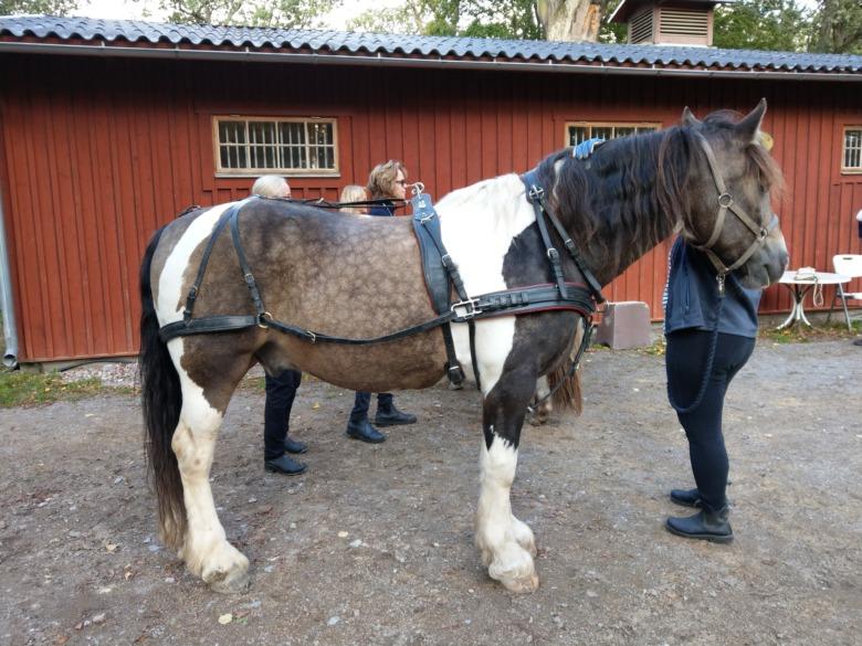 Häst M Sele Foto Daniel