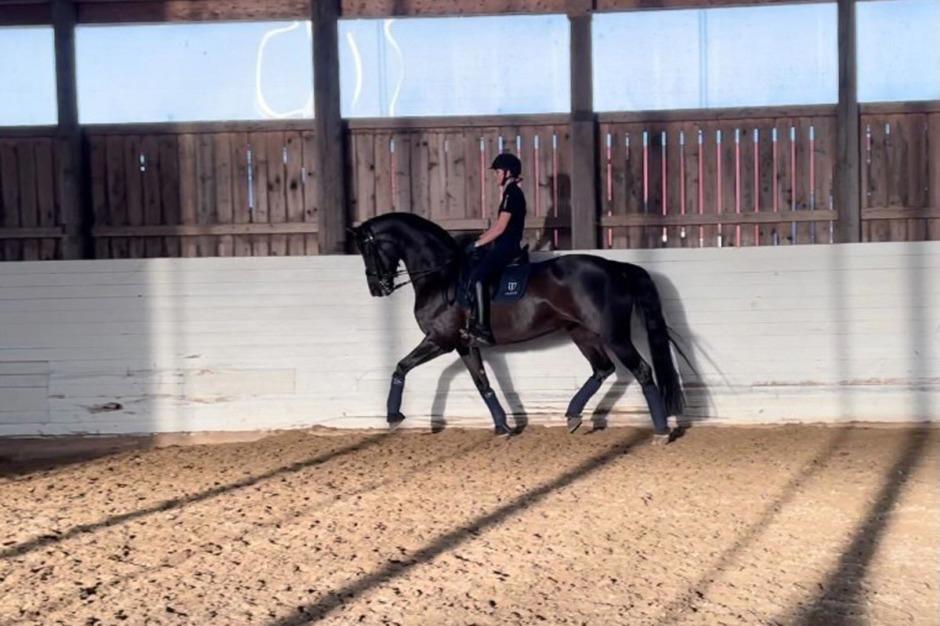 Diva blir juniorhäst i Sverige
