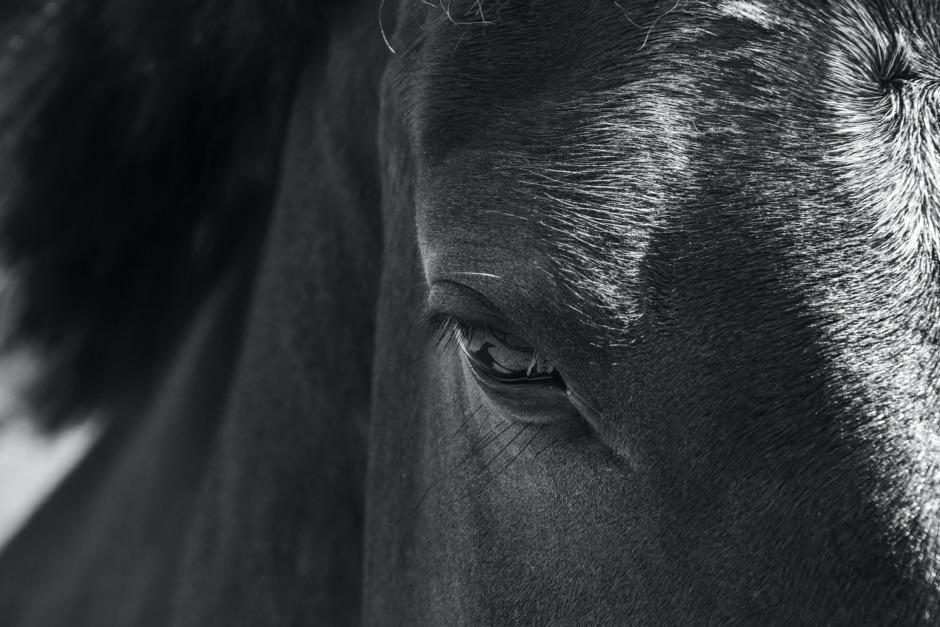 """Tvist om panikslagen häst: """"Det kom från ingenstans"""""""