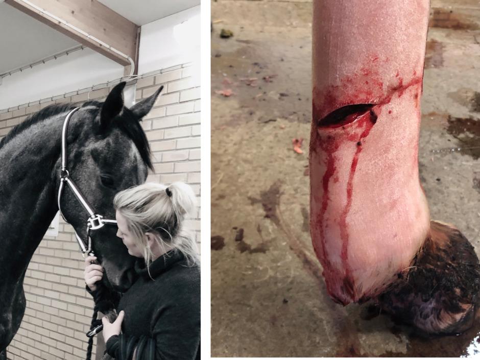 Tre hästar döda i Varberg  – nu vill ägaren hitta förövaren
