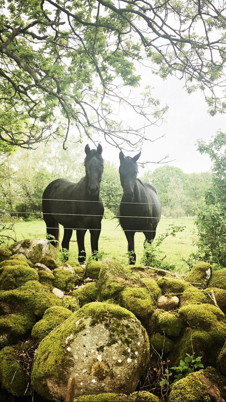 Jennelis Hästar