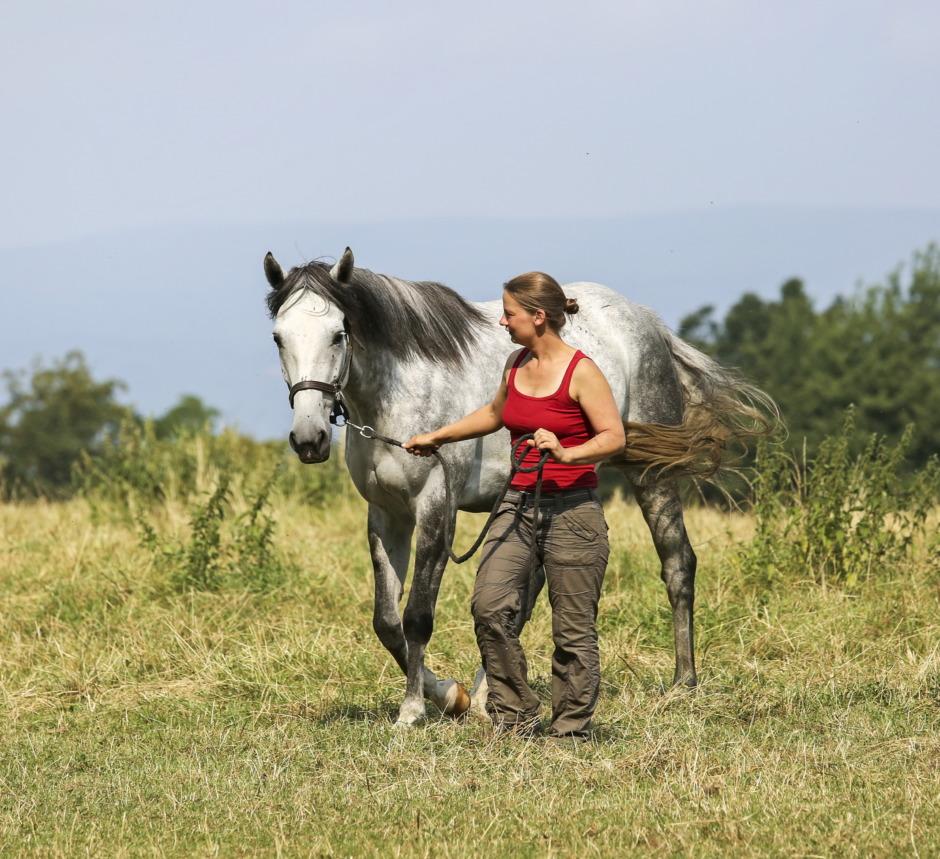 Hästar reagerar olika mot män och kvinnor